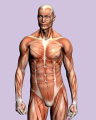 Het-menselijk-lichaam